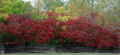 brilliant-red-leaves-on-natchez-trace-pkwy.jpg