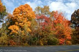 Colorful fall leaves on the Natchez Trace Parkway.