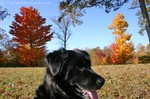 Dogs and fall colors.