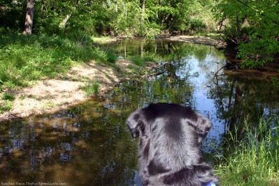 dog-looking-at-garrison-creek.jpg