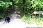 Our dog at the start of the Old Trace hiking trail.