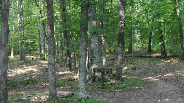 Natchez Trace Hiking Near Nashville TN: Why We Like The Old Trace Hiking Trail At Milemarker 426.3 + Photos
