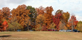 The Natchez Trace was a sea of colors AND cars on this beautiful Fall afternoon... here's a long row of cars parked at a pull-off along the Parkway.