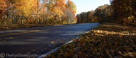 Leaves on the road.