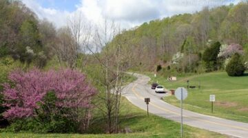 Natchez Trace In Spring: Colorful Budding Trees