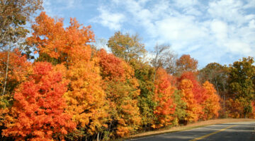 Sometimes Tennessee Fall Foliage Peaks Early!… (Photos From Natchez Trace Parkway)