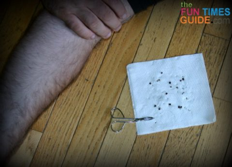 Some ticks we removed after hiking on the Natchez Trace Parkway in Nashville